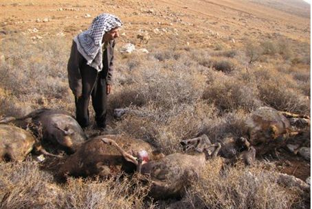 Arab sheep farmer and sheep burned to death
