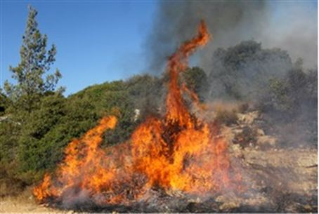 Brush fire (illustrative)