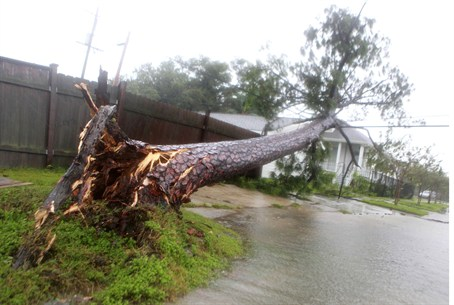 Tree uprooted and flung on to power lines by