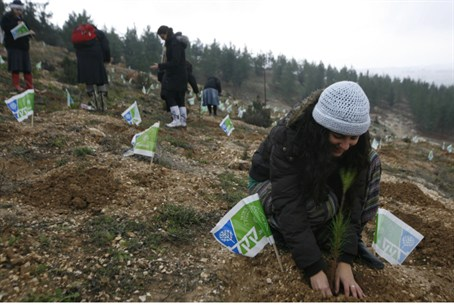 Planting Trees on Tu B'Shevat